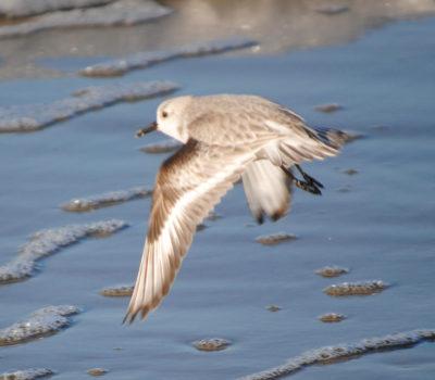 Vogel op strand